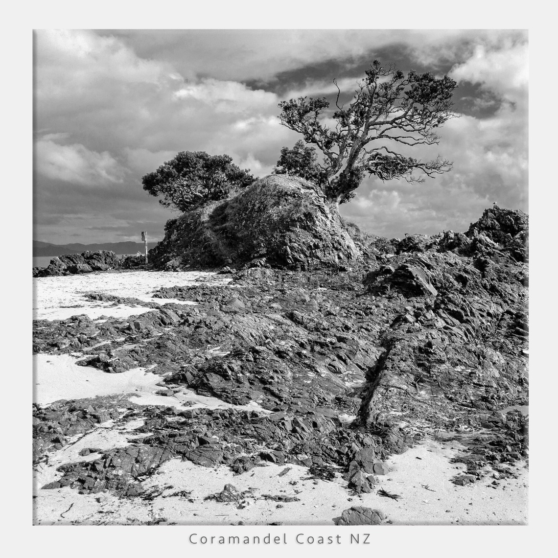 iPhone DNG capture wind blown tree coromandel coast in new zealand converted to monochrome