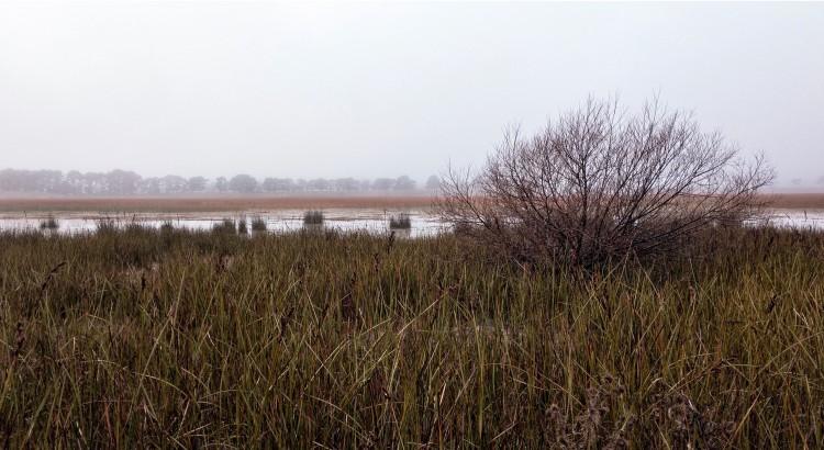 Rowes Lagoon on a Foggy Morning