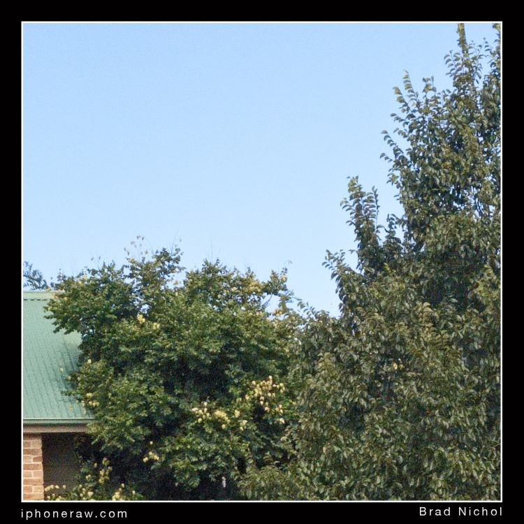 Extreme crop 24 mp version iPhone X telephoto module/lens, garden scene, blue sky and tree with roof and bricks.